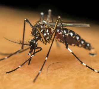 Leki na malarię a niedosłuch